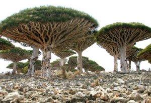 rsz_mushroom_trees.jpg