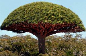 rsz_mushroom_tree.jpg