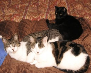 tabbycats2549.JPG