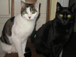 tabbycats254.JPG