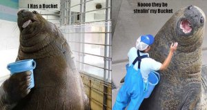 walrus_bucket.jpg