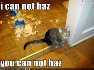 funny-pictures-cat-has-destroyed-your-food.jpg