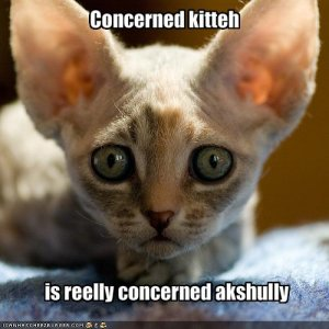 funny-pictures-your-cat-is-very-concerned.jpg