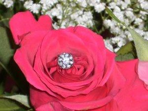 CIMGin flower.JPG