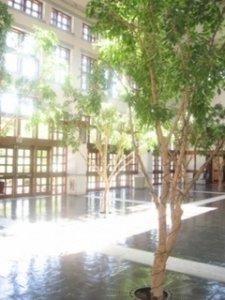 atrium3hdjfg.jpg