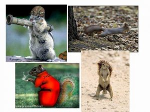 Resize of squirrelcollage.jpg