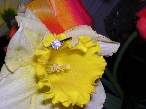 Diamondring2384.jpg