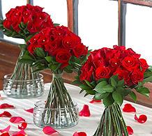 roses - standuppy.jpg