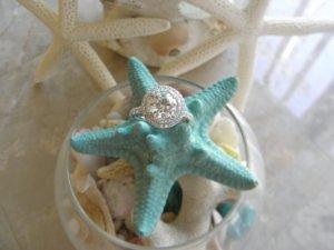 starfish2.jpg