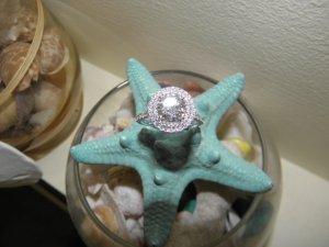 starfish_3.jpg