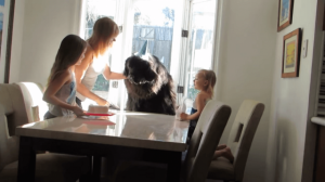 enormous-dog-celebrates-his-7th-birthday-too-cute-video.png