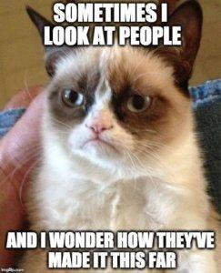 catmemegrumpy.jpg