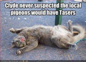 victim_of_pigeons_with_tasers.jpg