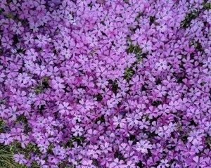 purple carpet.jpg
