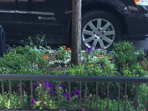 flowerscity.jpg