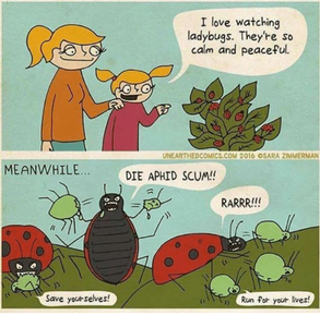 i-love-watching-ladybugs-theyre-so-calm-and-peaceful-unearthedcomics-com-23722644.png