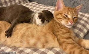 Sakura the otter & Mochi the cat.jpg