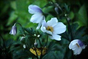 flowersingarden2020.jpg