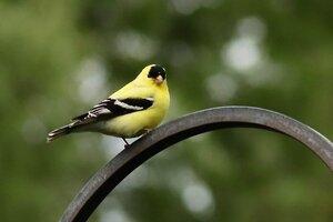 yellowbird2020.jpeg