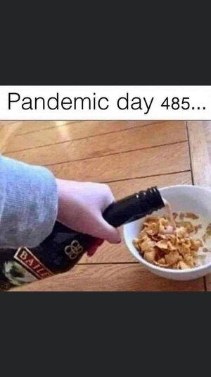pandemicday485.jpg
