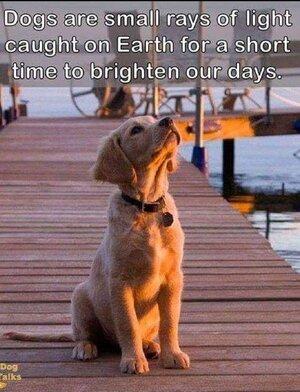 dogsareraysoflight.jpg