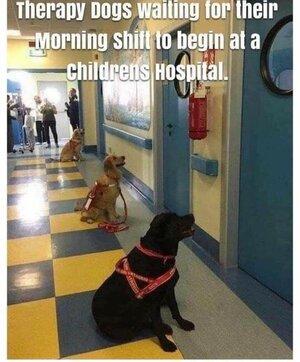 therapydogs.jpg