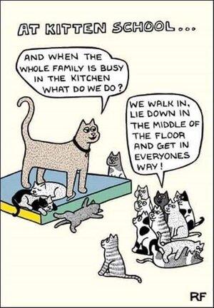catschool.jpg