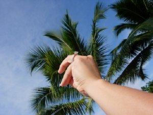 palm343ju.jpg