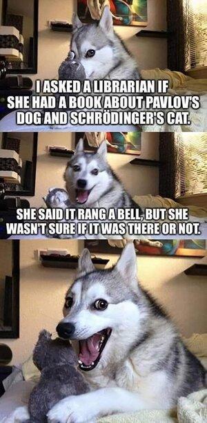 pavlov'sdogschrodinger'scat.jpg