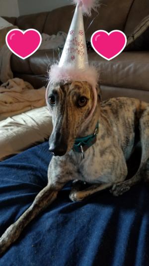 gigi is 3 years old