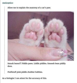 cat'spaw.jpg