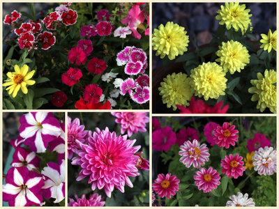 FlowersAug11.jpeg