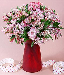pink peruvian lillies 20 stems (Medium).jpg