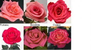 flowersfirst.JPG