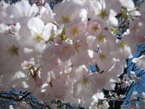 bloss.JPG