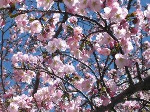 blossy22.JPG