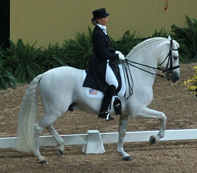 Kristina Harrison-Naness (USA) riding Rociero XV - PRE stallion\Grey\1995\ Rociero VIII x Jenson at 2007 FEI World Cup Finals
