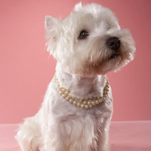 Dog Wearing Pearls