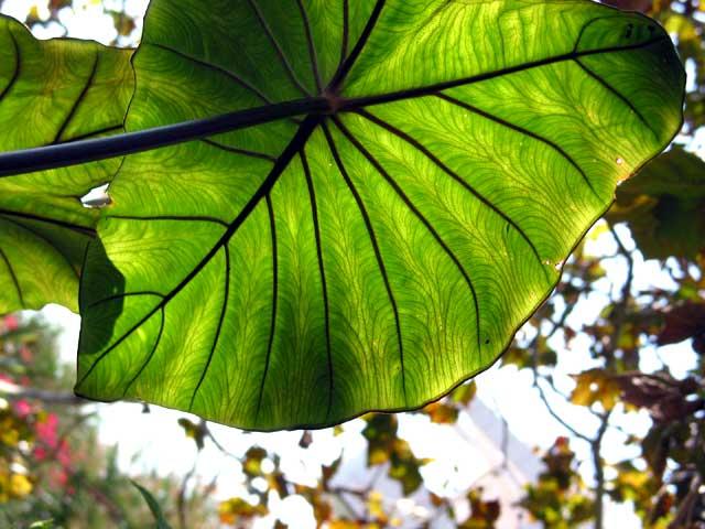 Leaf on the sun