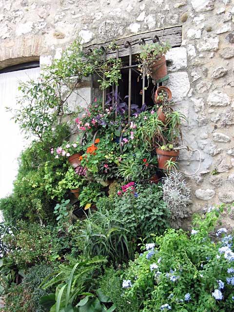 Flowers From a Window