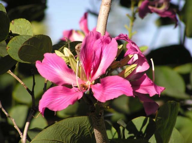 Tahiti Flowers 5