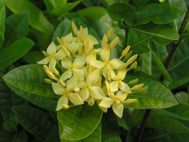 Tahiti Flowers 7