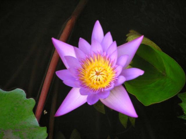 Tahiti Flowers 15