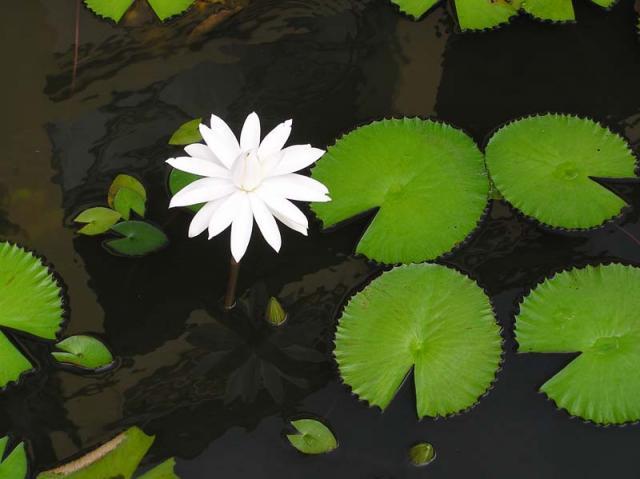 Tahiti Flowers 17