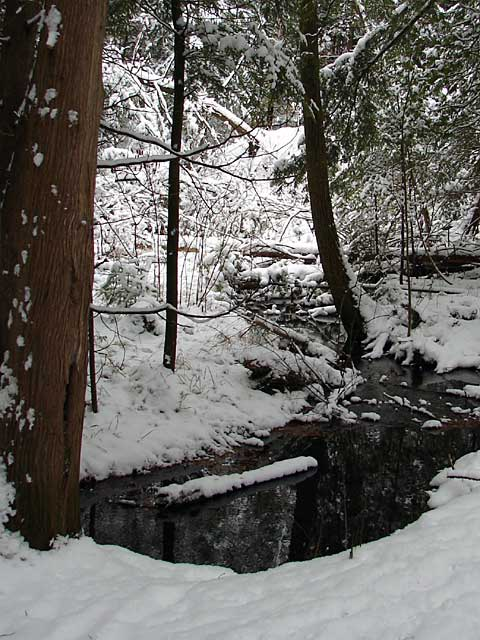 Little Creek in the Woods
