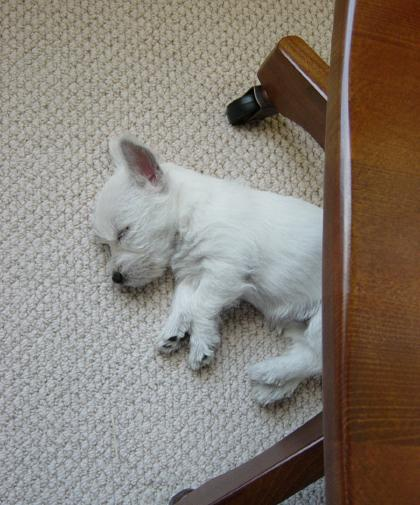 Puppy naptime.