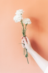 White Carnations flowers Photo by Silvia Rossana Garavaglia on Unsplash